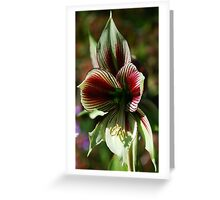 Papilio Greeting Card