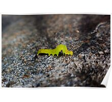 green inch worm 2 Poster