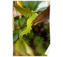 green inch worm 3 Poster