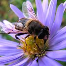 Its Thirsty Work Being a Bee by jacqi