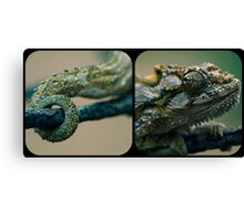 Heads or Tails Canvas Print