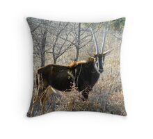 sable antelope Throw Pillow