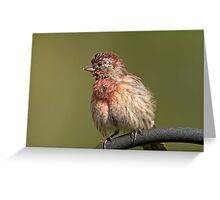 Puffed up, Proud, and Perky Finch Greeting Card