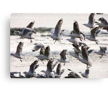 Birds! Canvas Print