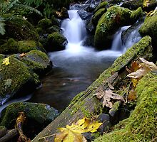 Whitehead Creek #4 by Allan  Erickson