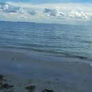 THE BEACH AT FT. MYERS, FLORIDA by MsLiz