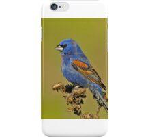 Blue Grosbeak iPhone Case/Skin