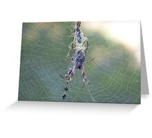 Spider Greeting Card