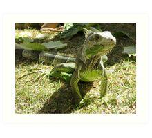 Iguana Papa Art Print
