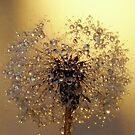 Love of Dandelions by funkyfacestudio