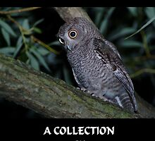 """YOUNG SCREECH OWLS"" CALENDAR by MICKSPIXPHOTOS"