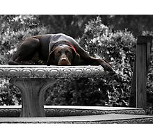 DOG DAYS Photographic Print