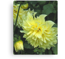 Kelvin Floodlight Dahlia Canvas Print