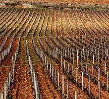 Vineyard vertical. by Victor Pugatschew