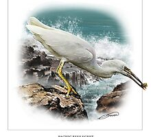 PACIFIC REEF EGRET 2 by DilettantO
