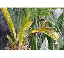 Palm Flowers Photographic Print