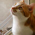Ginger Cat Calendar by Marie Sharp