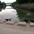 Getting Your Ducks in a Row by Susan Russell