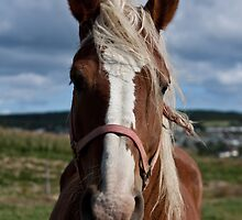 Equine Beauty by Daphne Johnson