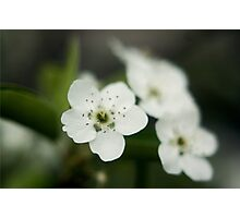 Little White Flowers Photographic Print
