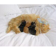 Mama Cat Photographic Print