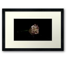 Blemished  Framed Print