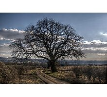 Tynedale Tree Photographic Print