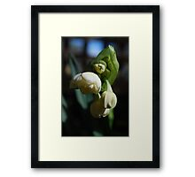 Love is as Beautiful as the Most Precious Flower Framed Print