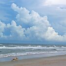 A dog's life on Ponte Vedra Beach by Caren