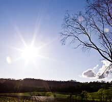 Spring over the vines by kazmelb