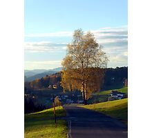 Tree, road and indian summer evening II | landscape photography Photographic Print