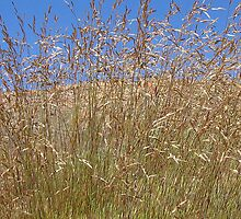 Sky Grass by Bruce Lund