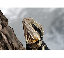 Water Dragon # 1 Photographic Print