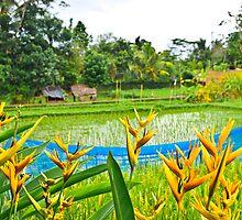 Bali Rice Paddy by John Miner