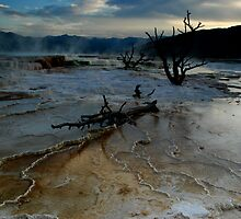 Mammoth Hot Springs by Jennifer Suttle