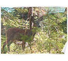 Doe, a deer... Poster
