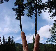 PEACE TREE by tkrosevear