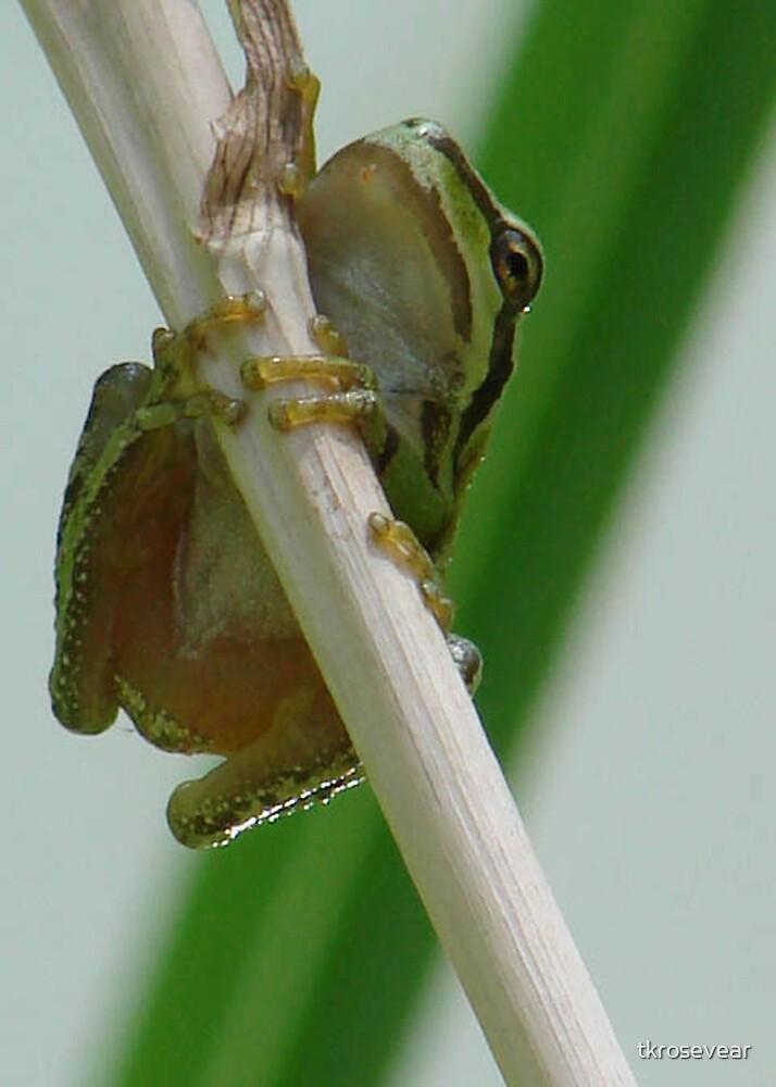 Froggin' around by tkrosevear