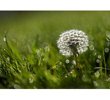 Simply Dandy Photographic Print