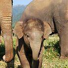 All about elephants! by lokanin