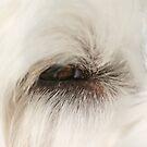 Eye of the Dog by martinilogic