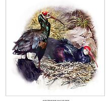 SOUTHERN BALD IBIS 4 by DilettantO