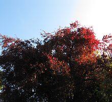 Natural Colour by Che Dean