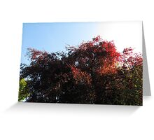 Natural Colour Greeting Card