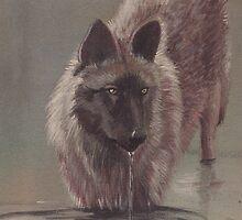 Wolf Drinking by morgansartworld