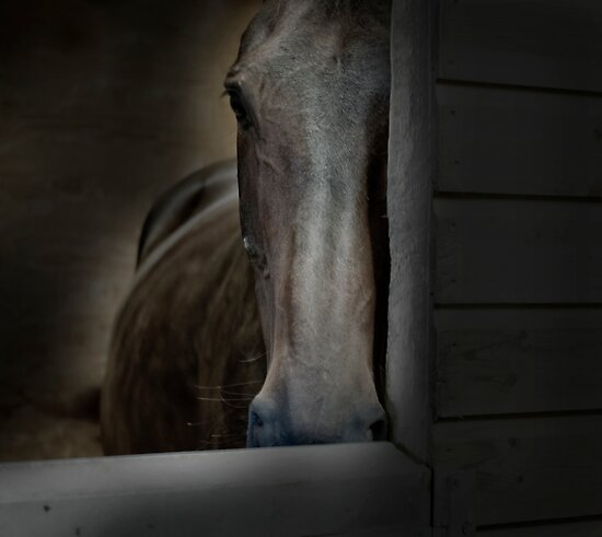 THE HORSE REFUGE  by scarlet james