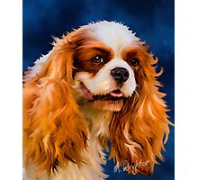 Chelsea - Cavalier King Charles Spaniel Photographic Print