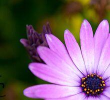 Flower by ShahnaChristine .