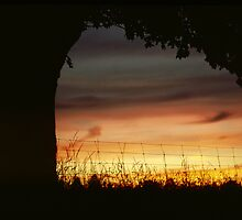Silhouette of Tree and Fence at Sunset by DMHImages