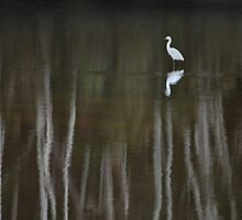 The White Heron by Ann  Van Breemen